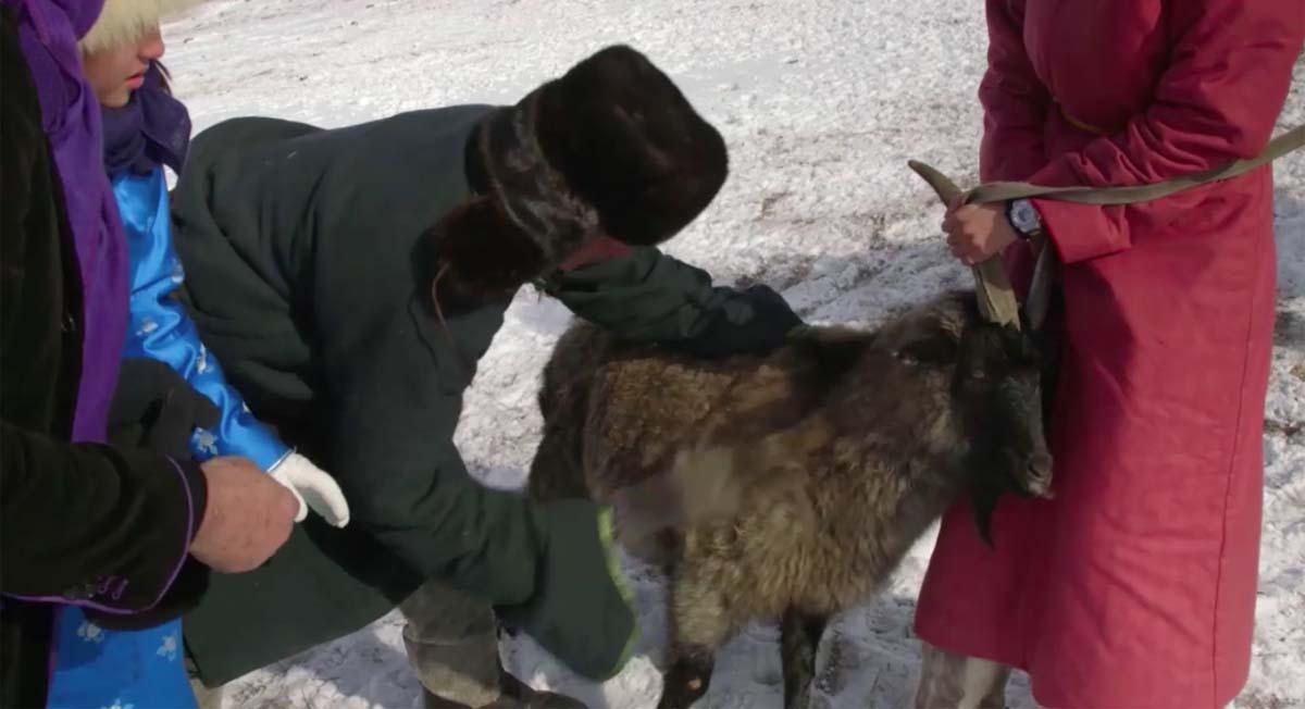 Cachemire-Haut-de-Gamme-Mongolie-Au-fil-du-Monde-8